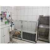 cirurgia para cachorro Brooklin