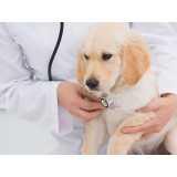 cirurgia de retirada de olho de cachorro