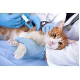 cirurgia de gato castrado
