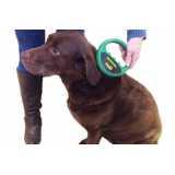 cirurgia de veterinária