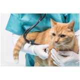 clínica veterinária cirurgia