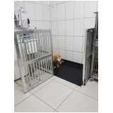 clínica de gato castração Vila Sônia