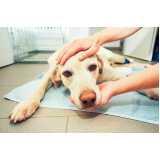 clínica veterinária de animais endereço Campo Limpo