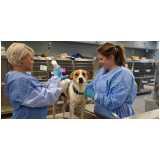 clínica com médica veterinária