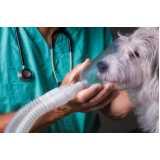 clínica veterinária de animais