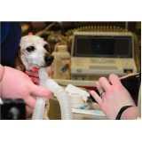 clínica veterinária para animais domésticos