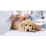 clínicas veterinárias cirurgias animal Jardim Bonfiglioli