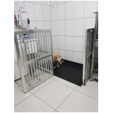 consulta veterinária em casa