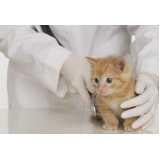 consulta veterinária para gatos
