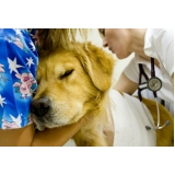 emergência canina Brooklin