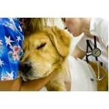 emergência veterinária