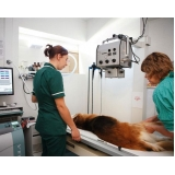 exame clínico veterinário preço Taboão da Serra