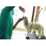 exame clínico veterinário Jaguaré