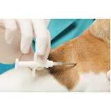 hospitais 24 horas para cachorro Portal do Morumbi