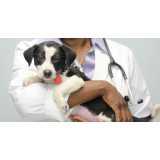 hospitais veterinários mais próximo Alto de Pinheiros