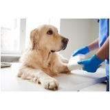 internação para cães preço Pinheiros