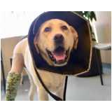 internação para cães valor Morumbi