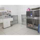 diária de internação veterinária