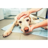 internação para cães