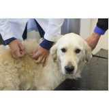 onde encontrar hospital veterinário cães e gatos Raposo Tavares