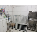 onde encontro clínica veterinária para cachorro Brooklin