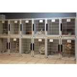 onde encontro consulta veterinária em cachorros Jardim Monte Kemel