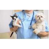 onde encontro consulta veterinária para animais domésticos Taboão da Serra