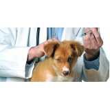 onde encontro vacinação para cachorro filhote Campo Limpo