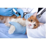 onde encontro vacinação para cães e gatos Jardim Maria Rosa