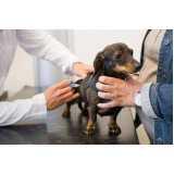 onde encontro vacinação veterinária antirrábica Vila Olímpia