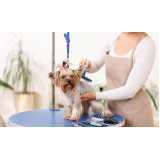preço de consulta veterinária para animais idosos Brooklin