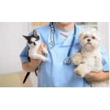 quanto custa consulta veterinária com hora marcada Cotia