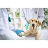 Cirurgias para Cachorro