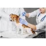 vacina veterinária v10 Santo Amaro