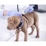 vacinação para animais de estimação Santo Amaro