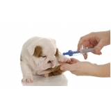 vacinação para cães e gatos preço Jardim Maria Rosa