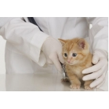 veterinário para cirurgia de piometra em gato Jardim América