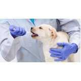 veterinário para cachorro