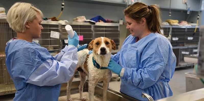Valor de Castração de Cachorra Vila Olímpia - Castração de Cachorro Fêmea