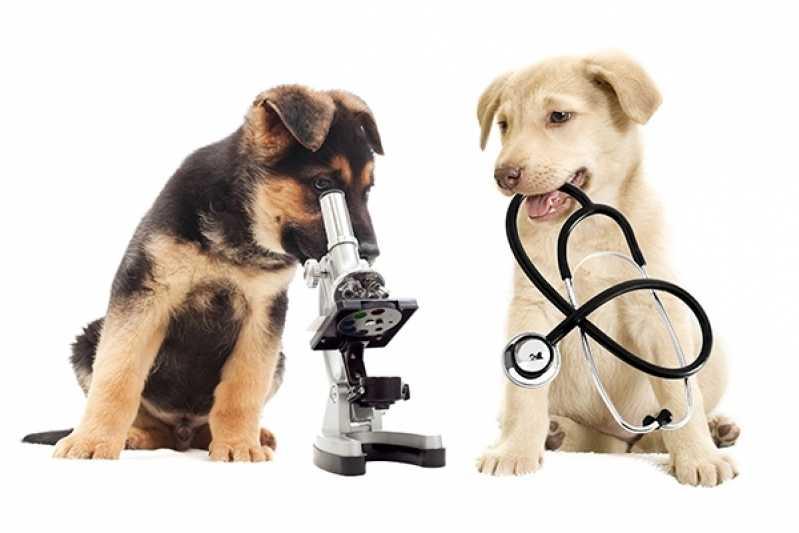 Valor de Castração de Cachorro Fêmea Taboão da Serra - Castração de Cachorra
